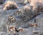 مصوبه ننگین علیه محیط زیست : از ادعای ایرانی گری تا تخریب ایران