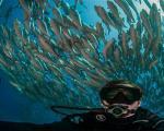 محاصره غواصان با هزاران ماهی+تصاویر