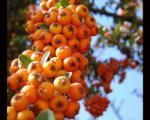 آیا خواص این میوه خوشمزه رامیدانید؟!!