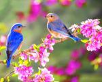 اشعار زیبای بهار و عید نوروز (3)