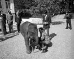 تصاویر/ علاقه خاندان پهلوی به حیوانات