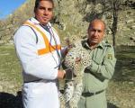 مرگ یک پلنگ ایرانی دیگر در گچساران+عکس