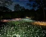 سفر جادویی در باغهای نورانی +عکس