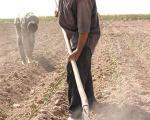 معاون وزیر جهاد کشاورزی:  مدیریت صحیح منابع آبی موجب افزایش سطح زیرکشت خواهد شد