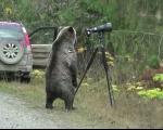 عکس: خرس کنجکاو و دوربین عکاسی!