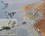 تصاویر استثنایی از جنگ دو قبیله: فرار لژیون اسب آبی از دل 100 کروکودیل گرسنه!
