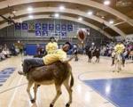 مسابقات بسکتبال با الاغ+ عکس