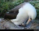 پیرترین پرنده جهان در سن 63 سالگی مادر شد!