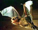 حمله خفاش ها به مدرسه ای در ایتالیا