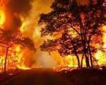 بزرگترین آتشسوزی در جنگلهای شمال/ 99 درصد آتش سوزی ها عمدی است
