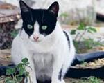 مرد آلمانی با گربه خود ازدواج کرد