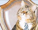 گربه آمریكایی نامزد انتخابات سنا شد