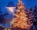 تاریخچه درخت کریسمس+عکس