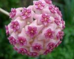 هندسه در دنیای گیاهان! +عکس