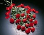 تاریخچه گل رز: گلی به وسعت عشق