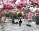 خریداری زمین جدید بهشت زهرا / رایزنی شهرداری برای تأمین گورستان در سه نقطه پایتخت