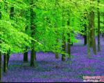 جنگل آبی بلژیک، رویا یا واقعیت؟ +عکس