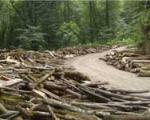 جریمه قطع درخت در تهران افزایش یافت
