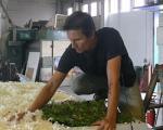 کاشت باغچه روی سقف اتوبوسها در اسپانیا