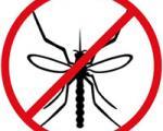 خانه ای بدون حشرات، بدون استفاده از سموم!