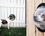 پنجره هایی جالب برای سگ های کنجکاو