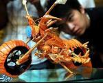 خرچنگ ها در تایوان، موتور سیکلت می شوند!+ تصاویر