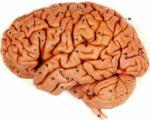 اعداد در داخل مغز انسان مشاهده شد !