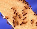 9 راهکار برای دور کردن مورچهها از گوشه و كنار خانه