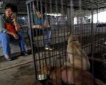 زن چینی قهرمان سگهای بی پناه+تصاویر