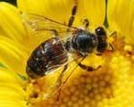 زنبورها شخصیت دارند!