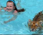 200 دلار بدهید، با ببر شنا کنید! +عکس