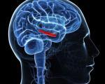 ردپای نوعی پروتئین در کاهش حافظه
