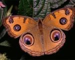 زندگی شگفت انگیز پروانه ها