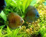 حافظه ماهیها چقدر است؟