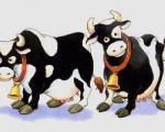 خواص گوشت گاو وانواع استفاده آن