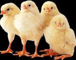 مزایای نگه داشتن حیوانات خانگی برای كودكان