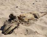 تصاویری از موجود عجیب و غریب دریایی کشف شده در ساحل انگلیس
