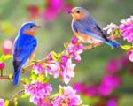 چرا پرندههای خوشآواز، خنگند؟