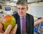 بینی الکتریکی که رسیده بودن میوه ها را تشخیص میدهد