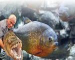ماهیهایی که 5 بار درندهتر از کوسه هستند +عکس