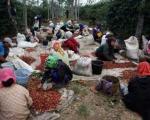 گران ترین قهوه جهان از مدفوع بدست می آید (+عکس)