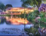 تصاویر دیدنی از آبشار رویایی گلهای ویستریا