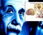 خوراک جدید مغز اینشتین برای پژوهشگران و کشف یک تفاوت جالب