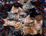 حریق در مركز نگهداری حیوانات مرگ بیش از ۶۰ گربه را رقم زد