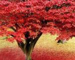 شعر منوچهری دامغانی درباره پاییز