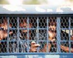 ۳۵ ایرانی زندانی در خارج به کشور بازگردانده میشوند