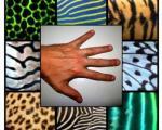 اثبات نظریه 62 ساله درباره چگونگی تکامل انگشتان دست و پا