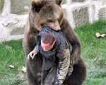 جنگ با خرس مرگ جوان آمریكایی را رقم زد