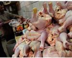 آغاز عرضه گسترده مرغ با نرخ تعادلی