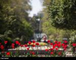 عکس: طبیعت بهاری پارک ملت تهران